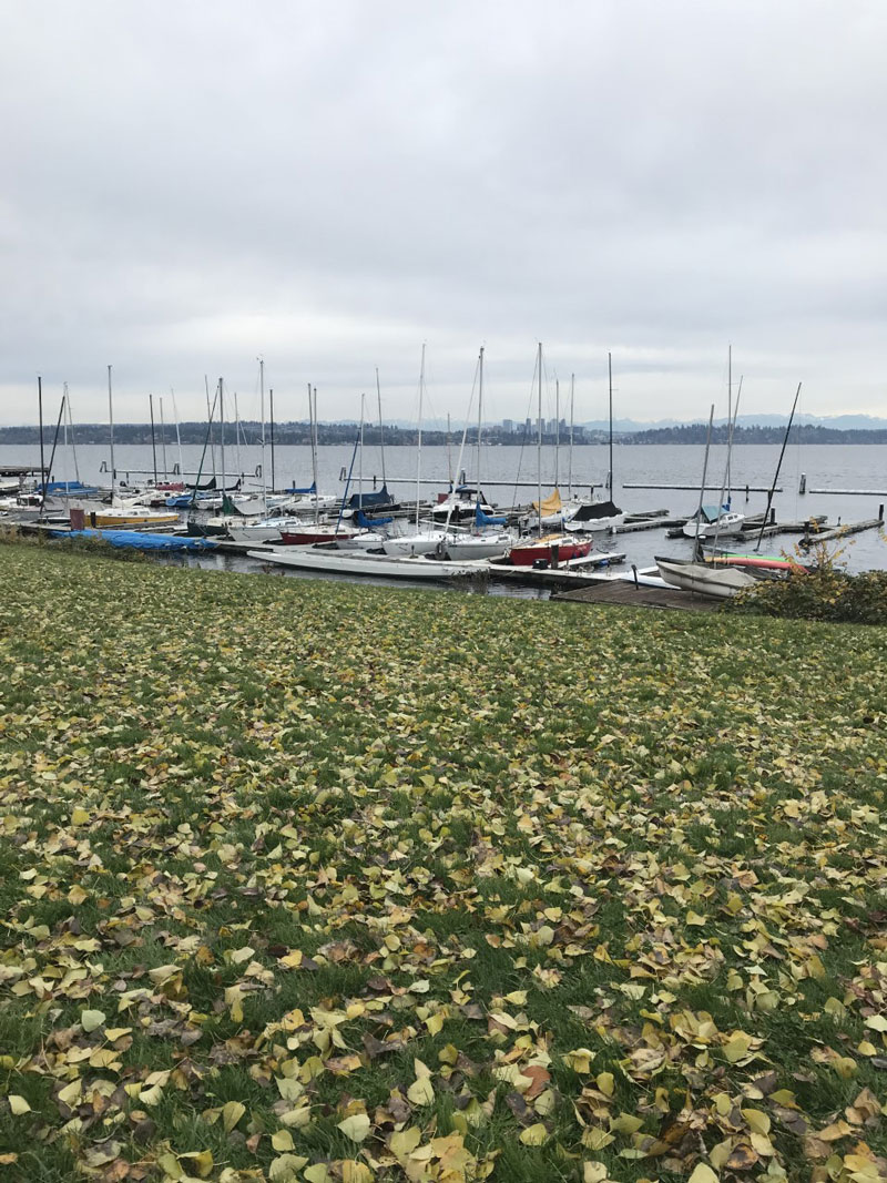 Yellow fall leaves in the foreground and in the background, boats sit at the docks in a large lake at leschi Park.