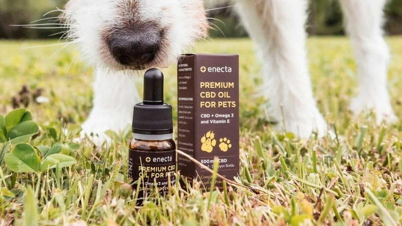 Is CBD Oil Toxic For Dogs? Can It Kill A Dog?