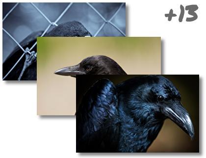 Crow theme pack
