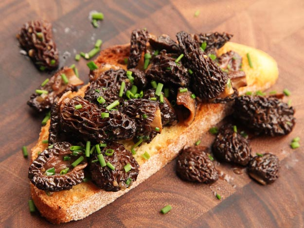 Fried morels on bread