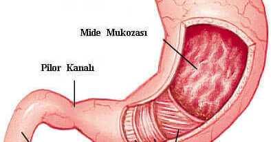 Sindirim Organları