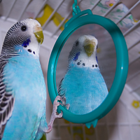 bird and mirror