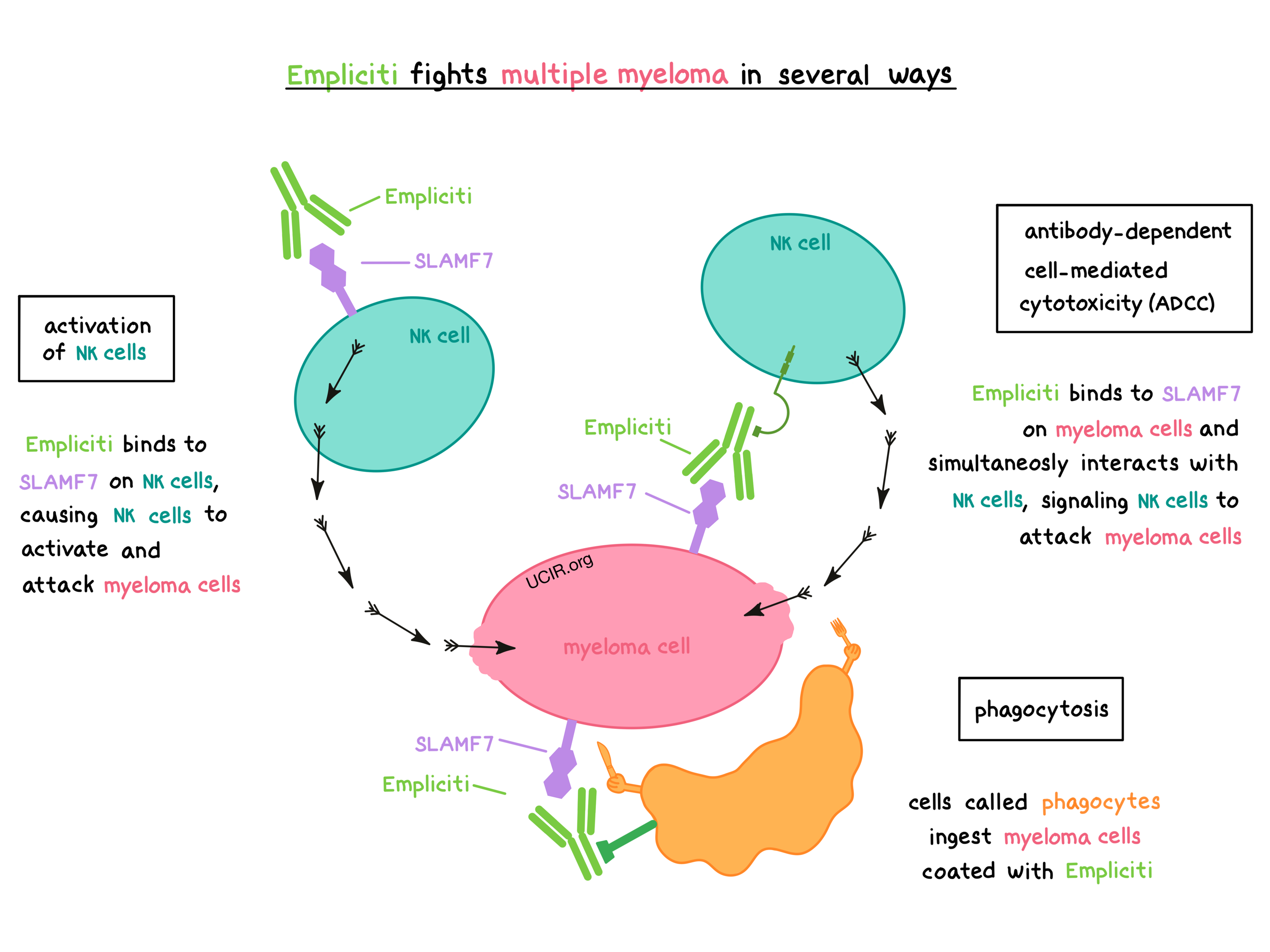 Illustration showing how Empliciti works