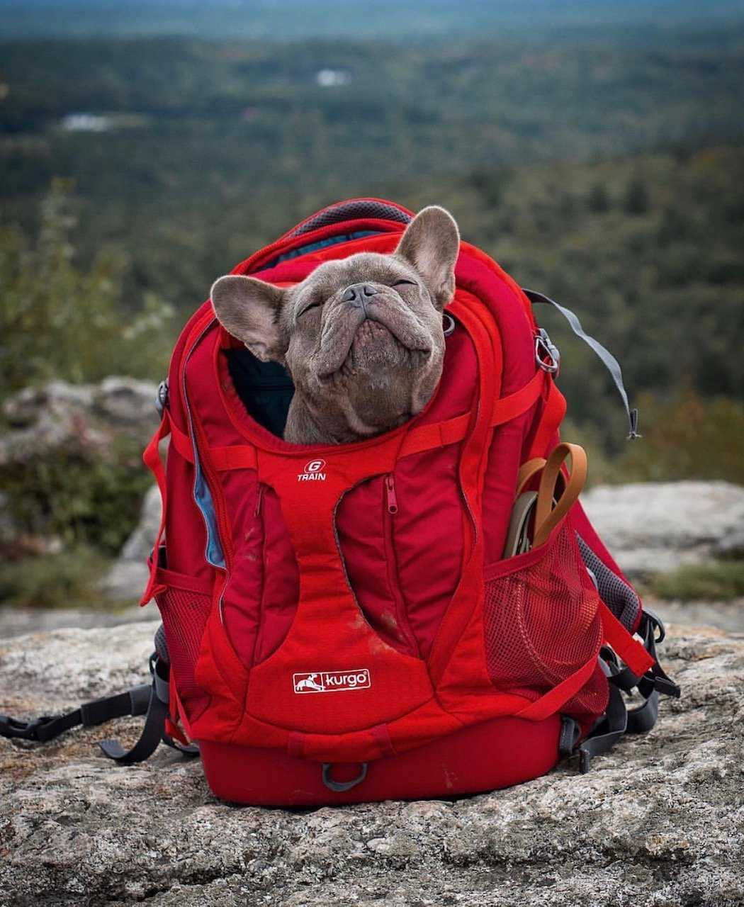 10 Great Dog Friendly Hikes in New Hampshire