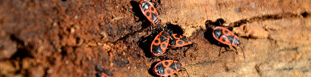 Do you need a pest inspection from Millennium Termite & Pest