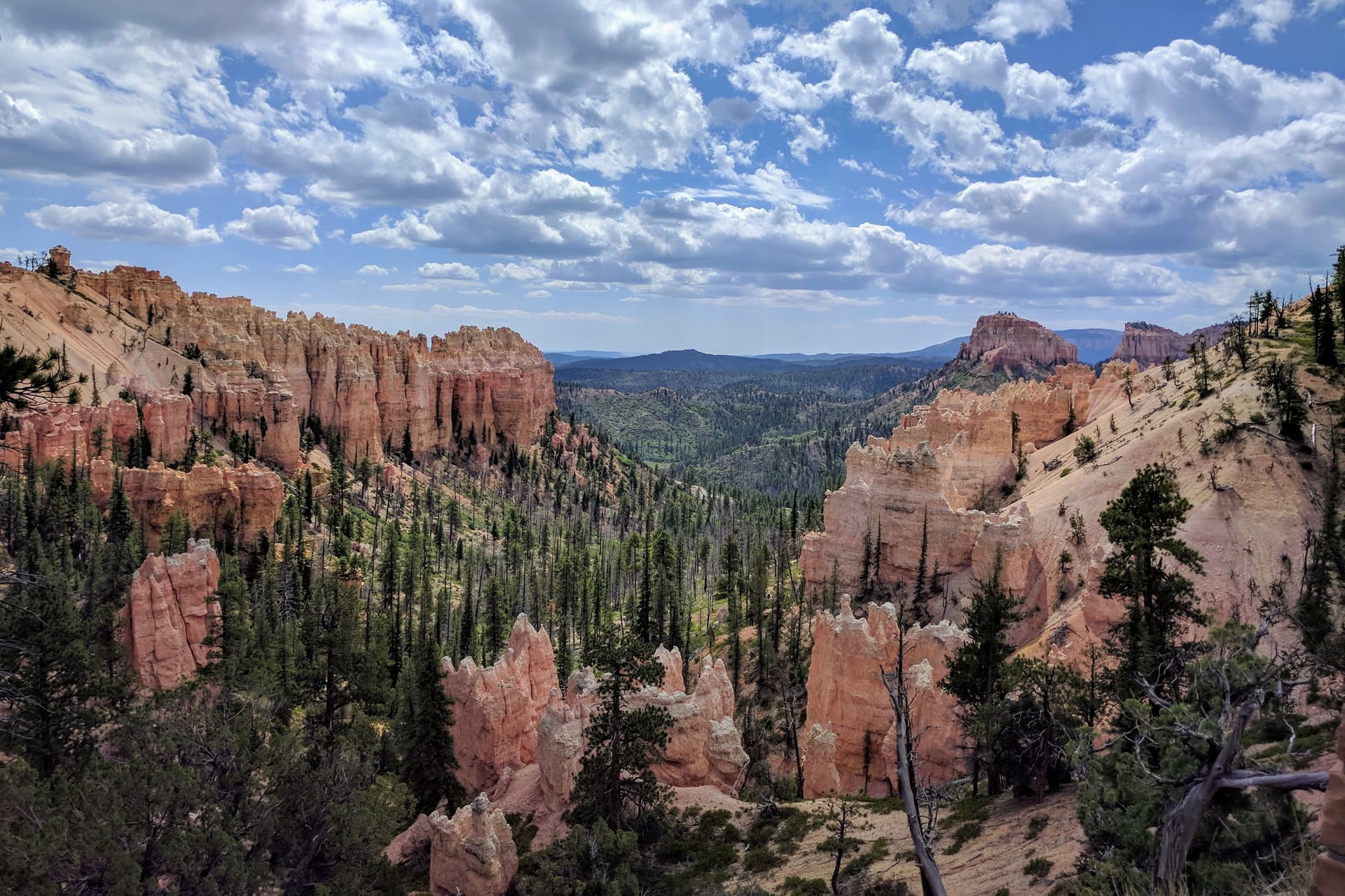 Looking down Swamp Canyon in Bryce Canyon National Park. The floor of the canyon is green with life, but the trees are all blackened and dead, killed by a fire the previous year.