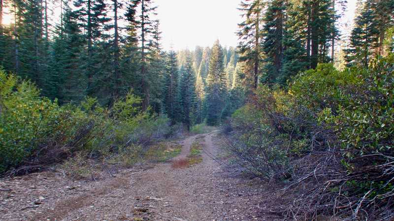 A dirt road leading to Gold Creek