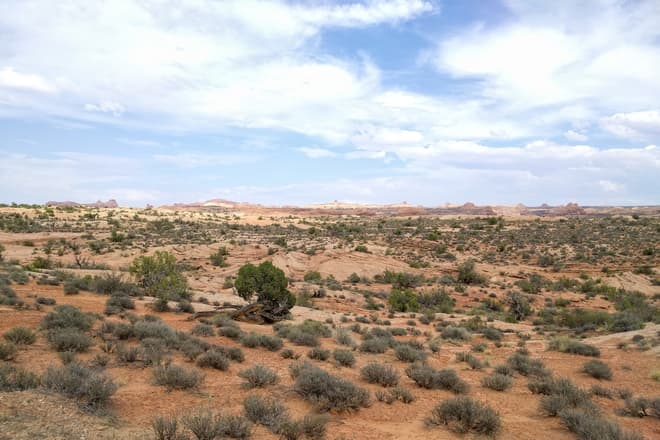 Looking east across a series of 'fossil' sand dunes at Arches National Park. Some of the park's arches and mesas can be seen on the horizon. In the foreground, a small bush grows in a wave-like twist that seems to mimic the fossilized dunes.