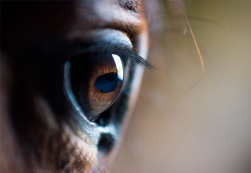 What to consider before buying a horse unseen