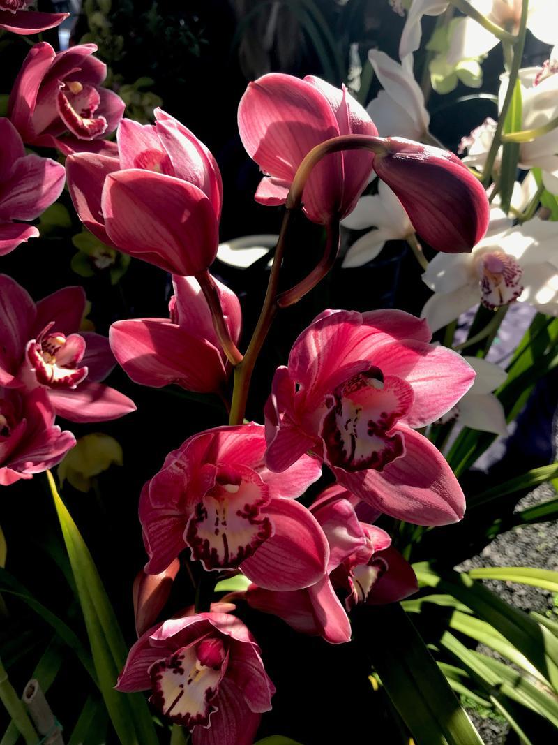 Farmer's Market fresh orchids