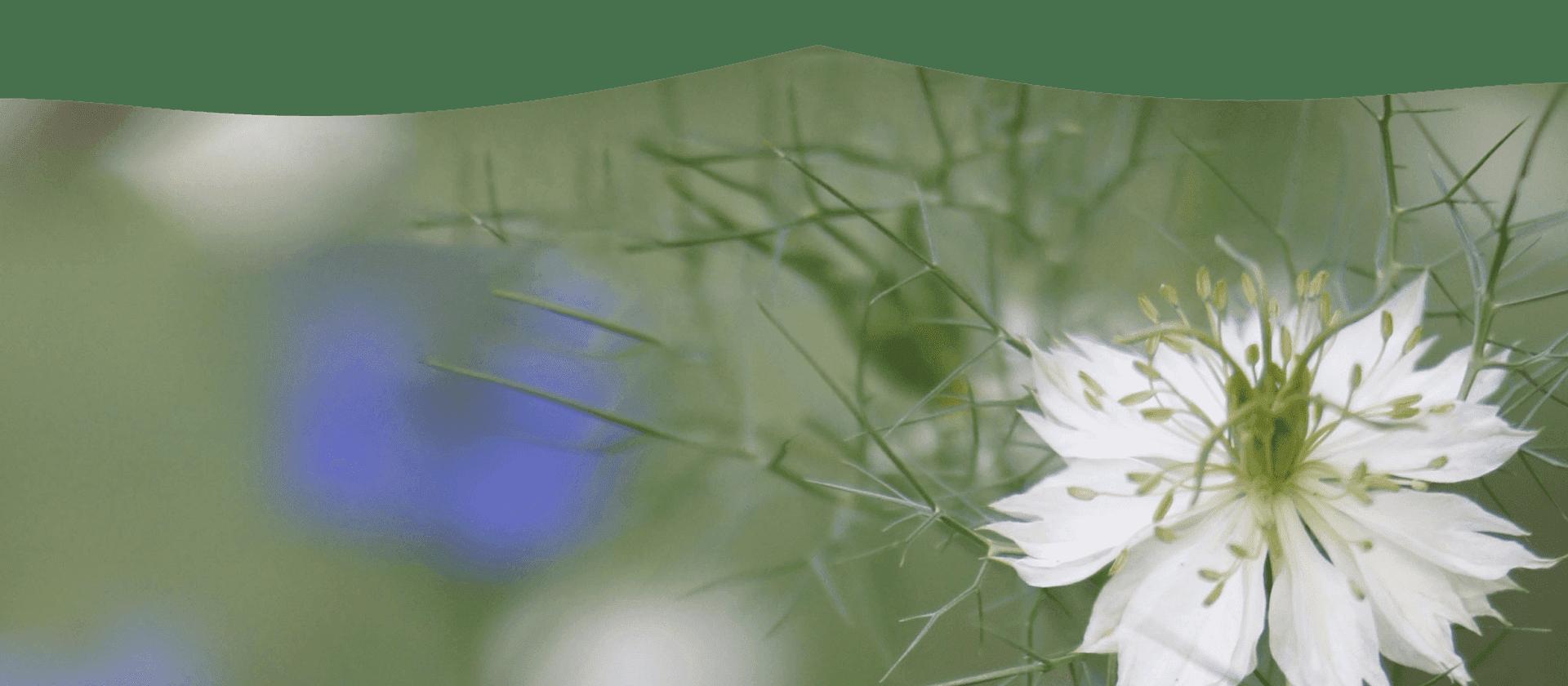 flower design background behind contact information