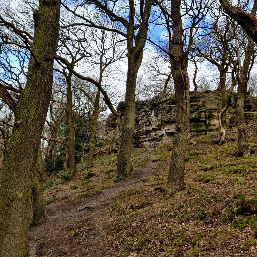 Cliff at Hetchell Wood Leeds