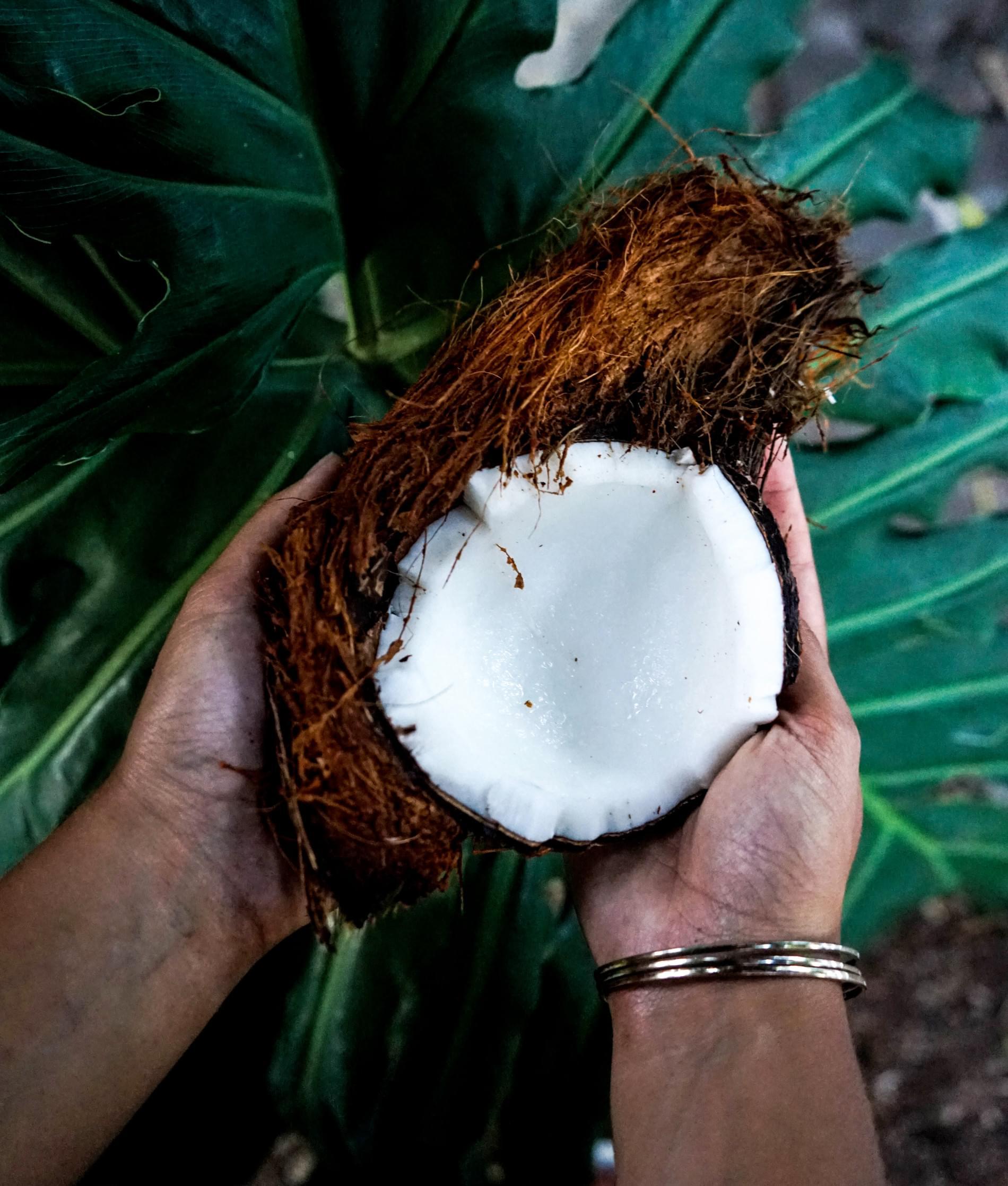 Noix de coco ouverte en deux partie.