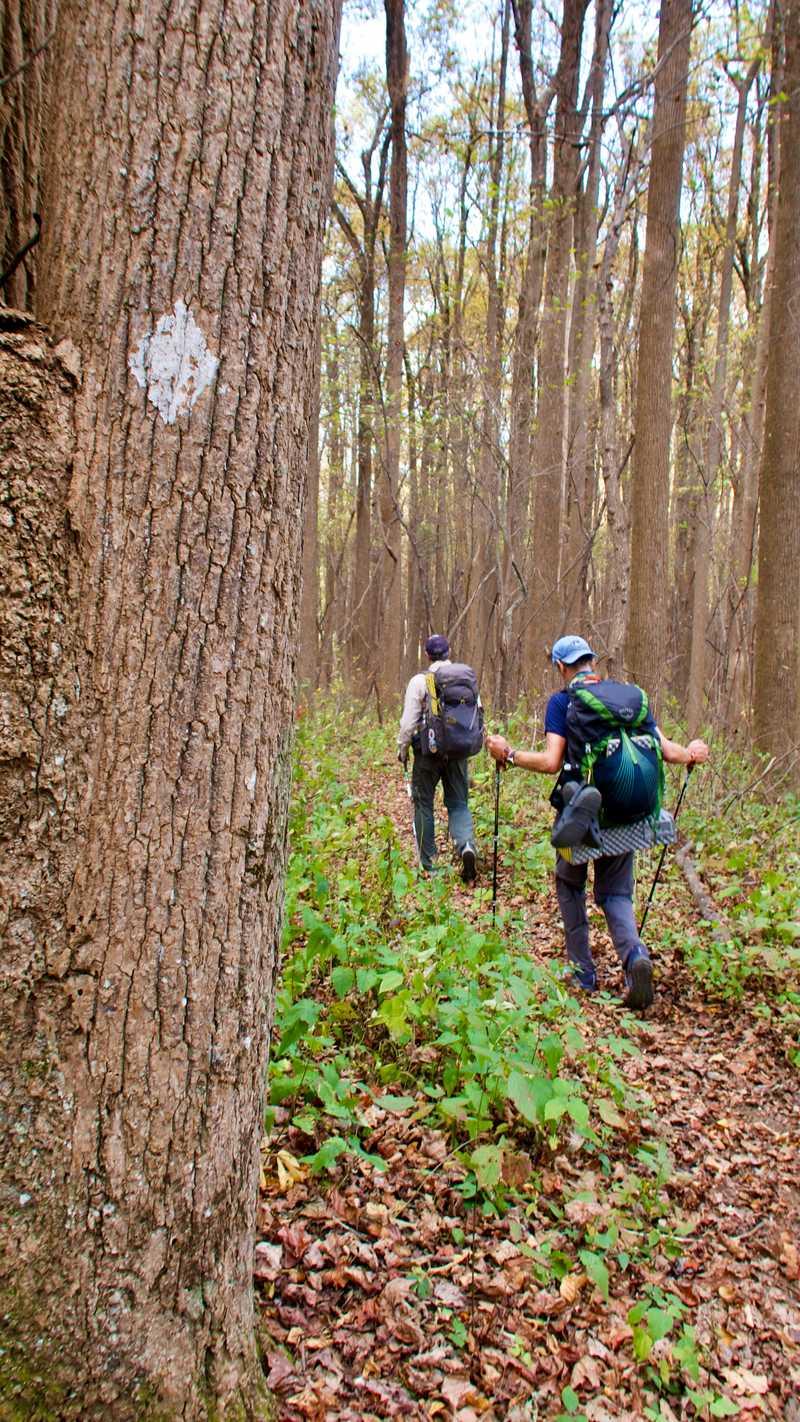 JA and Tengo walk past a Benton MacKaye Trail blaze