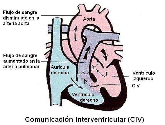 Fisiologia-CIV