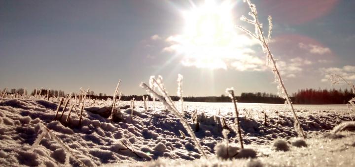 Aurinkoinen talvipelto