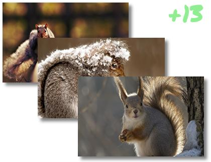 Squirrel theme pack