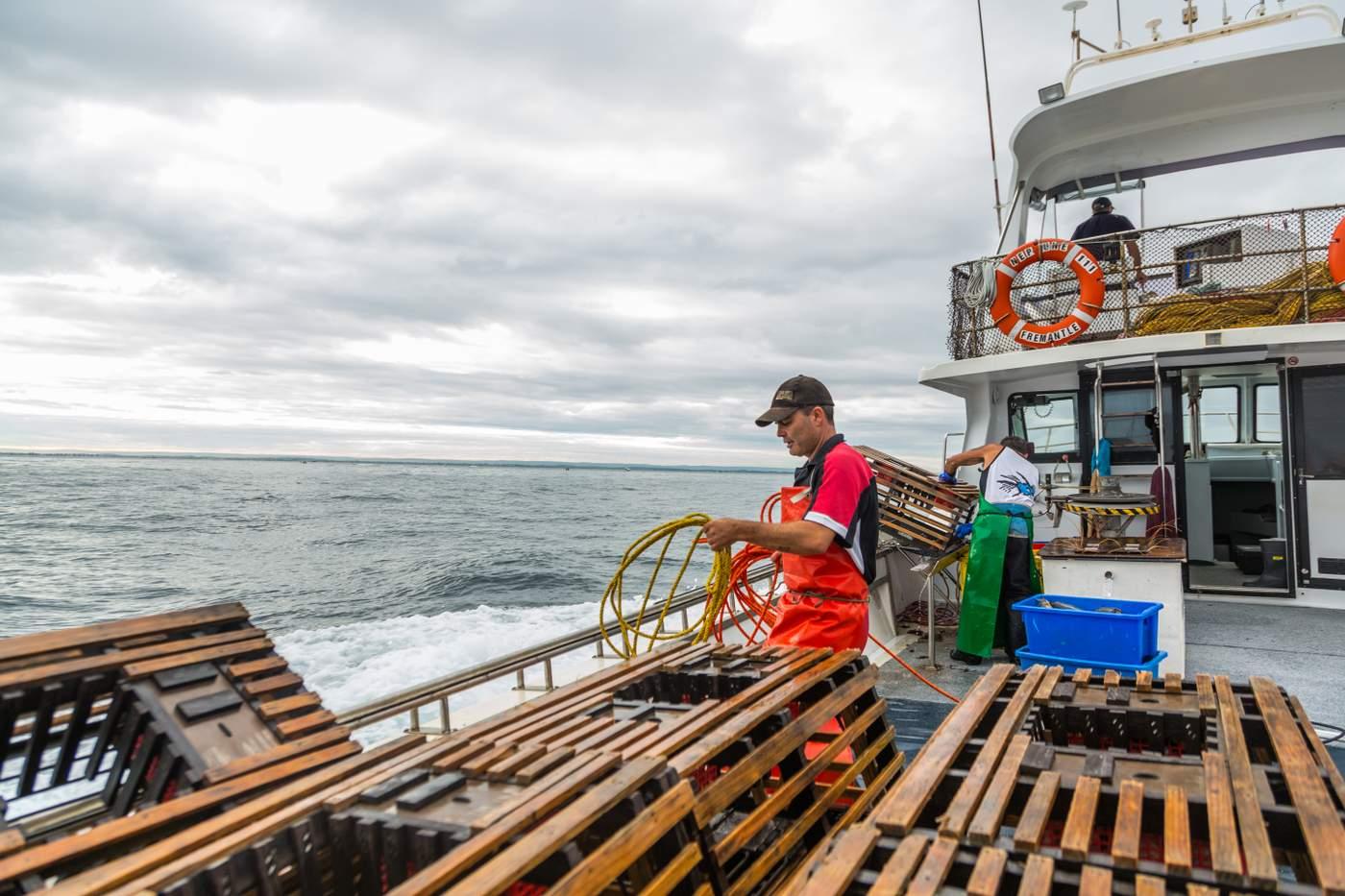 The Western Australia rock lobster fishery story   MSC