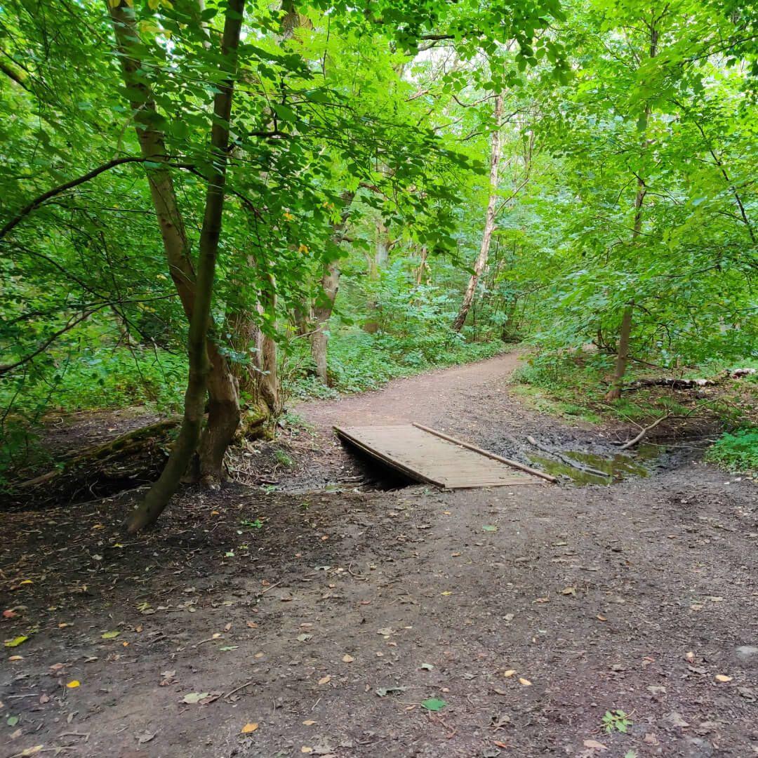 Middleton Wood footpath