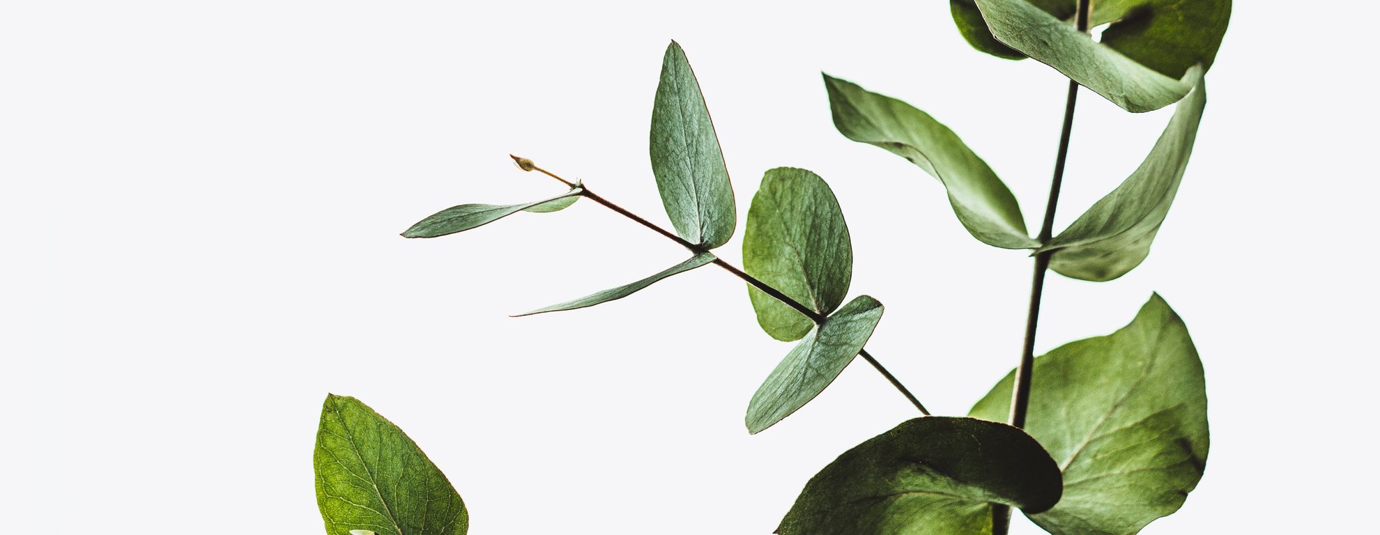 Plant on my desk is a friend - Featured image