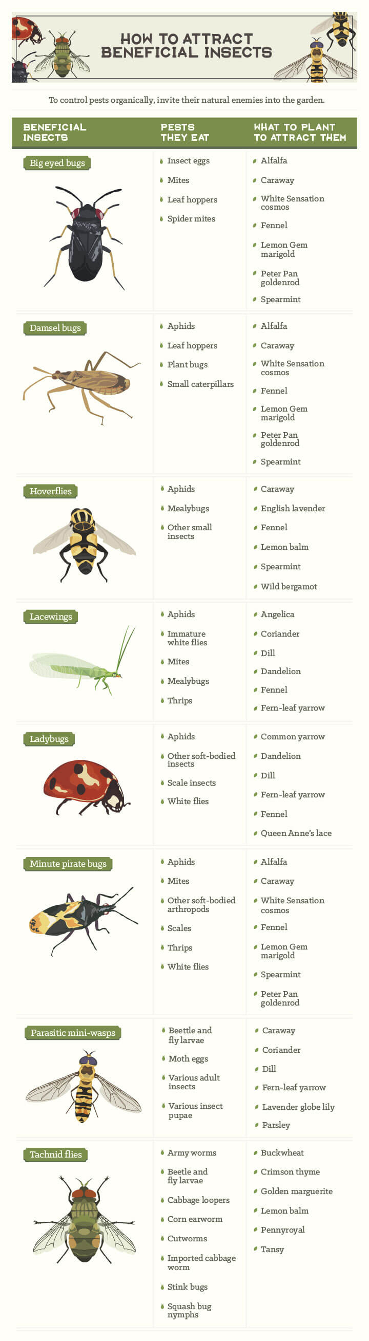 How to Attract Beneficial Insects Infographic