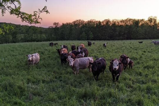 Why Regenerative Farming? - Featured image