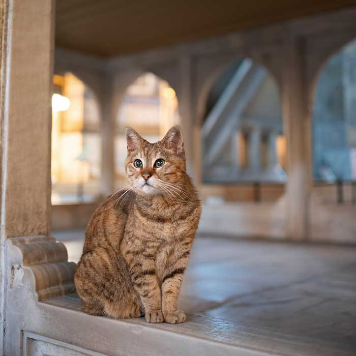 The nicest of Cats, Ayasofya, Istanbul