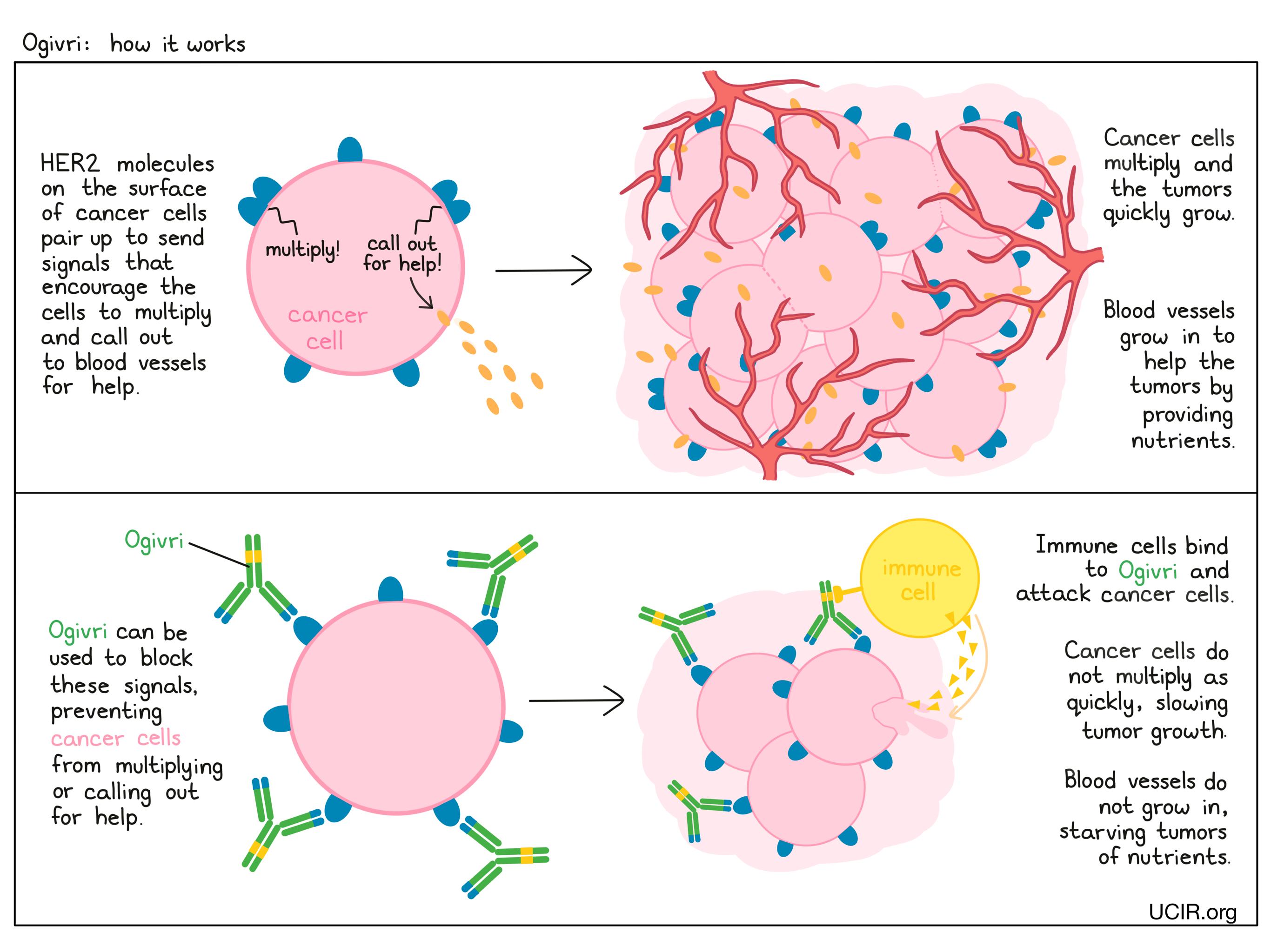 Illustration showing how Ogivri works
