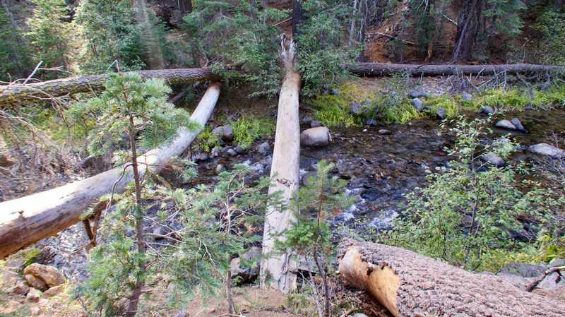 Crossing a log on King Creek