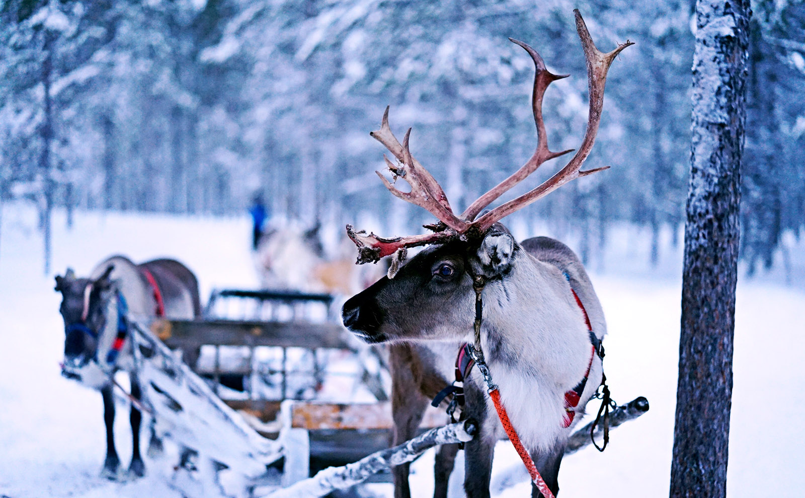 Finnish Reindeer, US-vs-UK Covers, a New Phryne Fisher & More: Endnotes 18 December