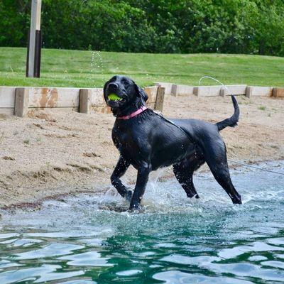 swim-dog-boarding