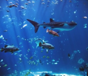 Aquariums - Why I Have One