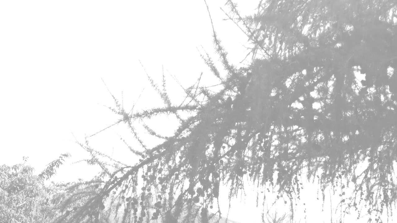branches dans la brise
