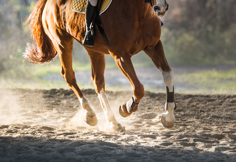 How to strengthen a young horse's collected canter