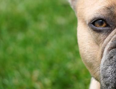 Is Your Dog Aggressive Toward One Person Only? Here's Why