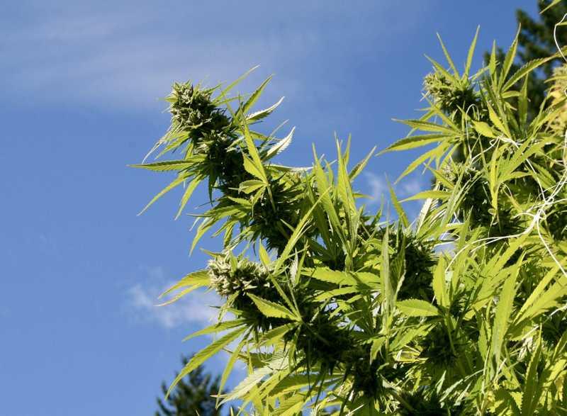 Understanding Medical Marijuana's Many Shapes & Forms