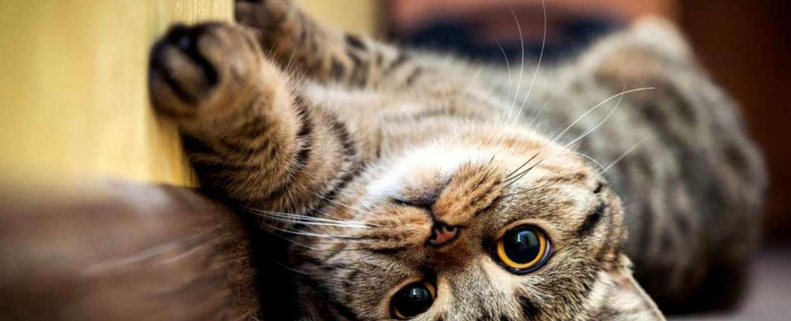 Curiozități despre labele pisicilor