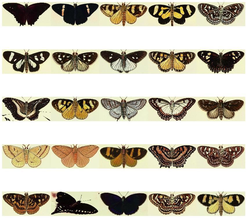butterflies_2.png