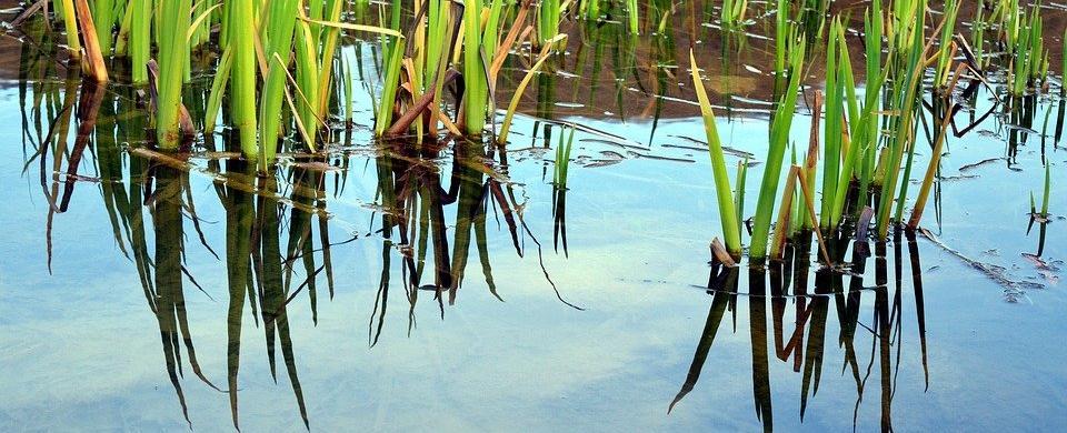 Despre Plante de apă pe înțelesul copiilor