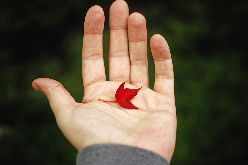 Small red leaf - Photo by Ksenia Makagonova on Unsplash