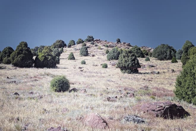Three deer graze on the slope of a rocky, grass- and pine-covered hill.