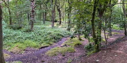 Bramley Fall Woods paths in undergrowth