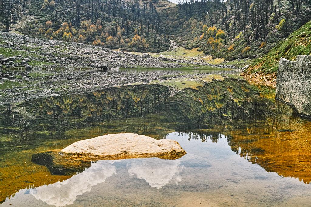 Flora and Fauna east of Kareri Lake