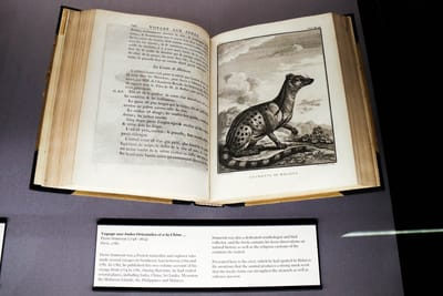 A photo closeup of a nature book. It features a drawing of a civet ('La Civette de Malacca') on the right page, and a write-up on its opposite side.