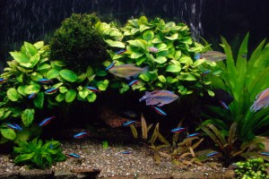 6 Tips to Maintain Healthy Freshwater Aquarium Plants