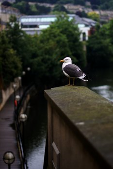 Seagull Sat Upon A Wall