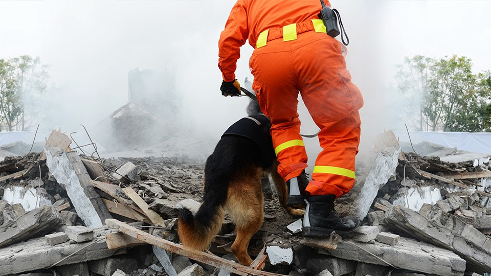 Disaster response official and a dog providing recovery assistance at a disaster site.