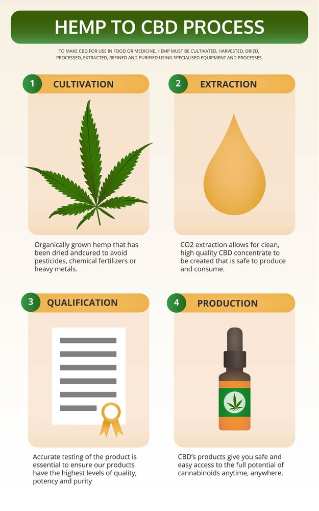 From Cannabis Plant To CBD Oil