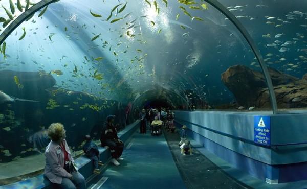 Um dos maiores aquários do mundo