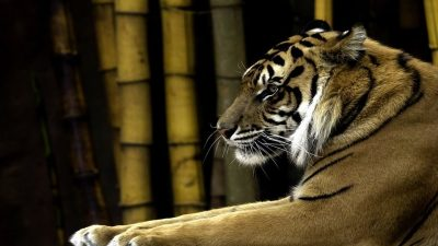 Focus: The Sleeping Tiger of South East Asia Awakens